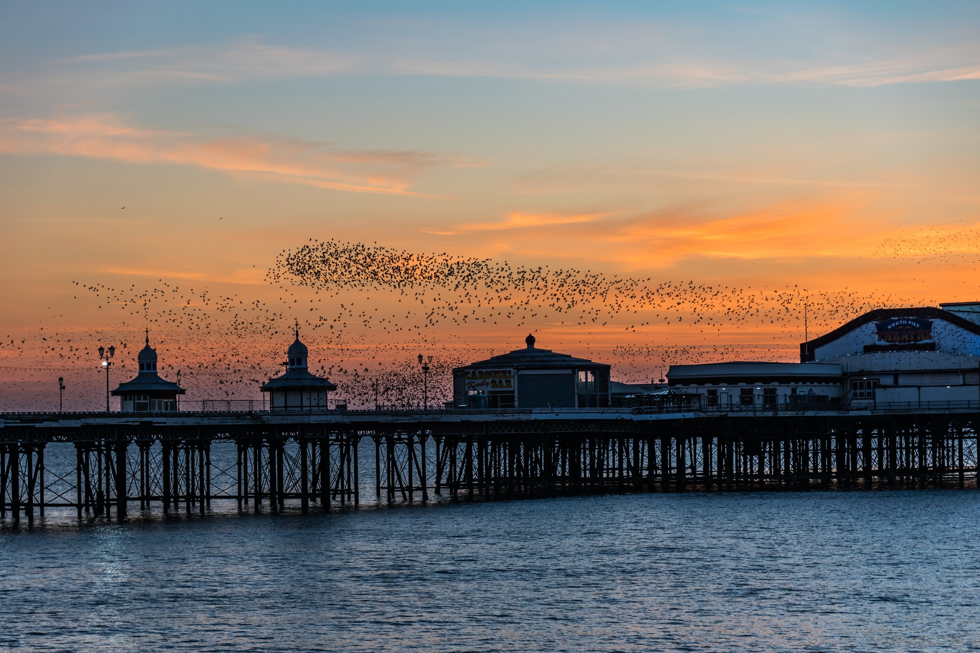 The Magic of Murmuration and Self-Management in Organizations 3